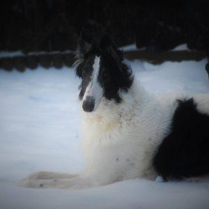 Kennel Domino4evers | Luzy i sneen