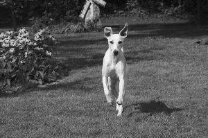 Kennel Domino4evers | Malik på bænken